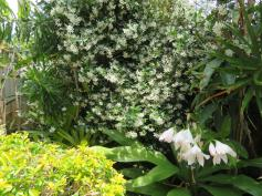 oct garden 025_5184x3888