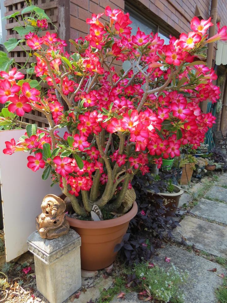 jacks garden phopos 032_3000x4000