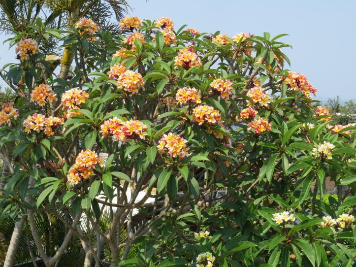 jacks garden phopos 033_4000x3000