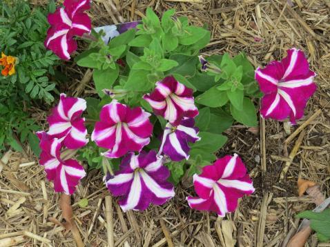 jacks garden phopos 049_4000x3000