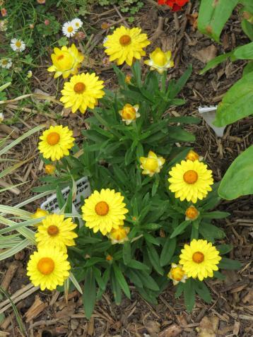 jacks garden phopos 055_3000x4000