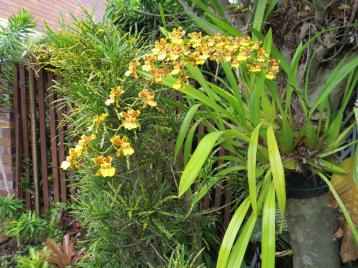 jacks garden phopos 056_4000x3000