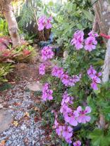 november garden pc 007_3888x5184