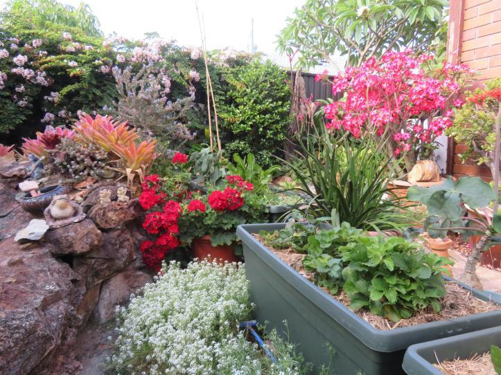 november garden pc 013_5184x3888
