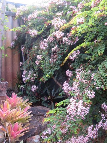 november garden pc 014_3888x5184