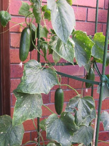 november garden pc 015_3888x5184