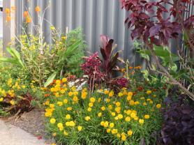 november garden pc 017_5184x3888