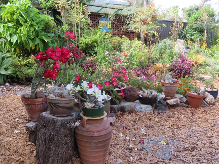 november garden pc 019_5184x3888