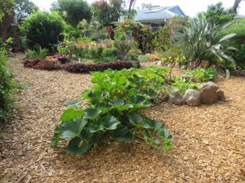 november garden pc 020_5184x3888
