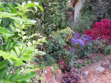 november garden pc 032_5184x3888