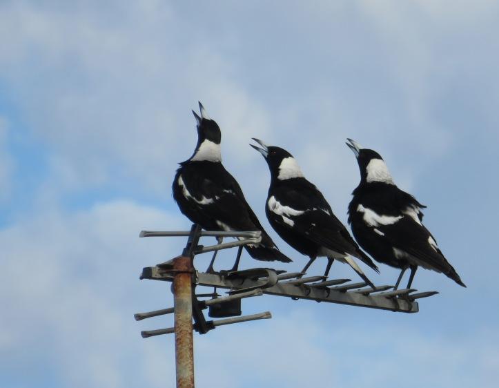 august garden birds 044