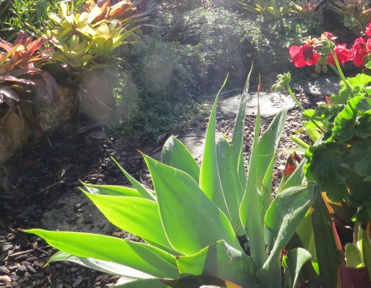 june garden 019