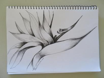 patterns and forms and strelitzia drawing 024_5184x3888