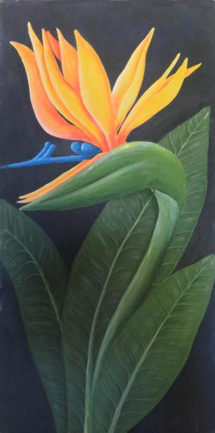 patterns and forms and strelitzia drawing 026_2282x4599