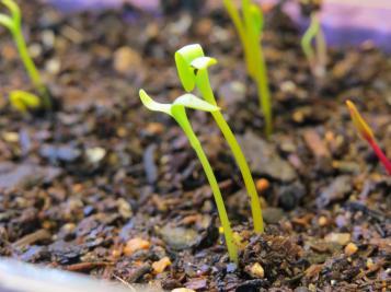 march garden 005_4000x3000