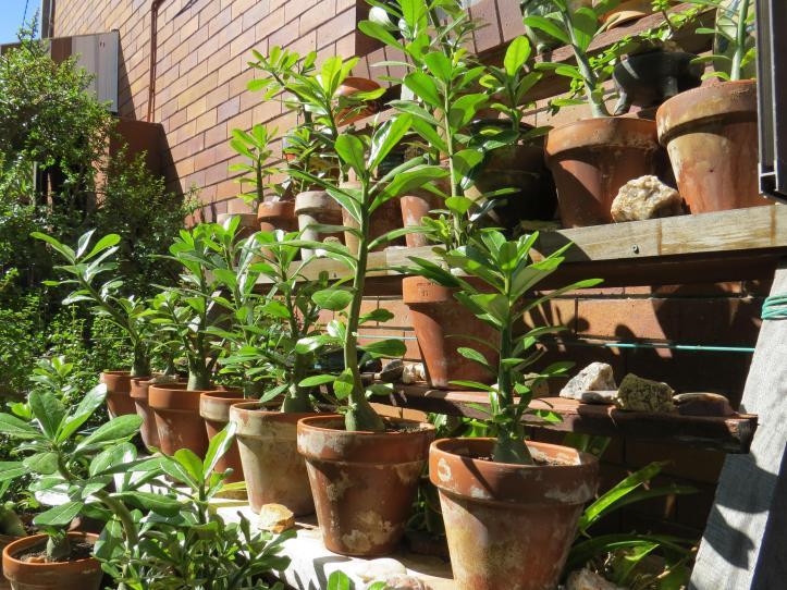 march garden 008_4000x3000