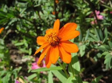 march garden 017_4000x3000