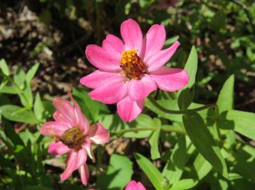 march garden 018_4000x3000