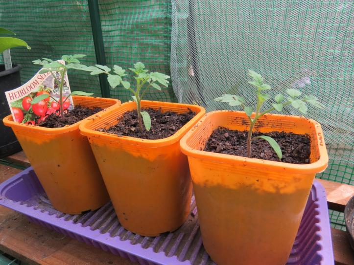 march garden 051_4000x3000