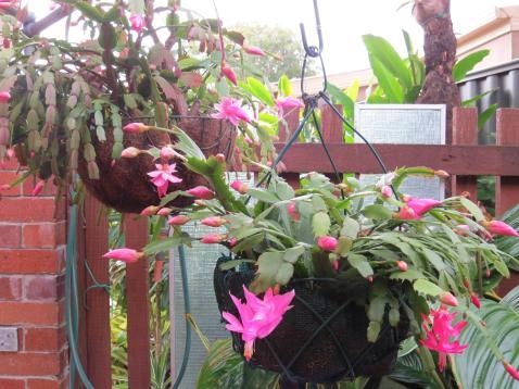 may garden jc camera 011_4000x3000