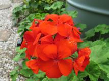 may garden jc camera 020_4000x3000