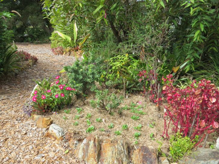 may garden pc 006_4000x3000