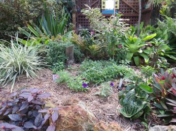 may garden pc 019_4000x3000