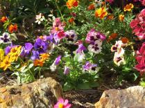 august garden 021_4000x3000