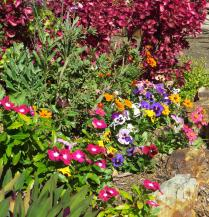 august garden 047_2870x2989