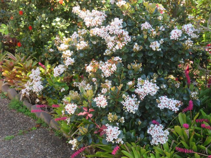 sept flowers 026_5184x3888