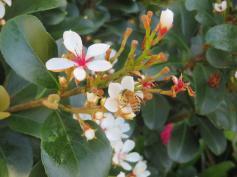 sept flowers 027_5184x3888