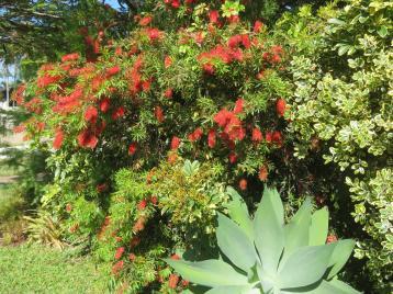 september garden 020_5184x3888
