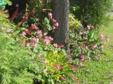 september garden 024_5184x3888