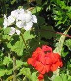 september garden 030_3026x3447