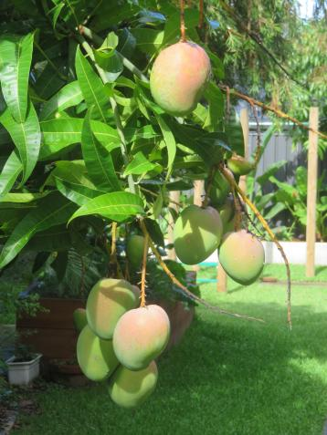 december garden 012_3888x5184