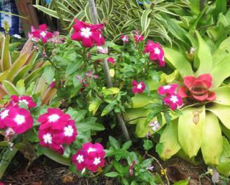 december garden 014_3527x2847