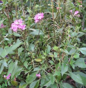 december garden 038_2661x2709