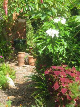 january garden 013_3888x5184