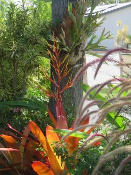 january garden 015_3888x5184