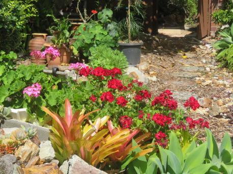 january garden 016_5184x3888