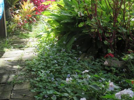 january garden 019_5184x3888