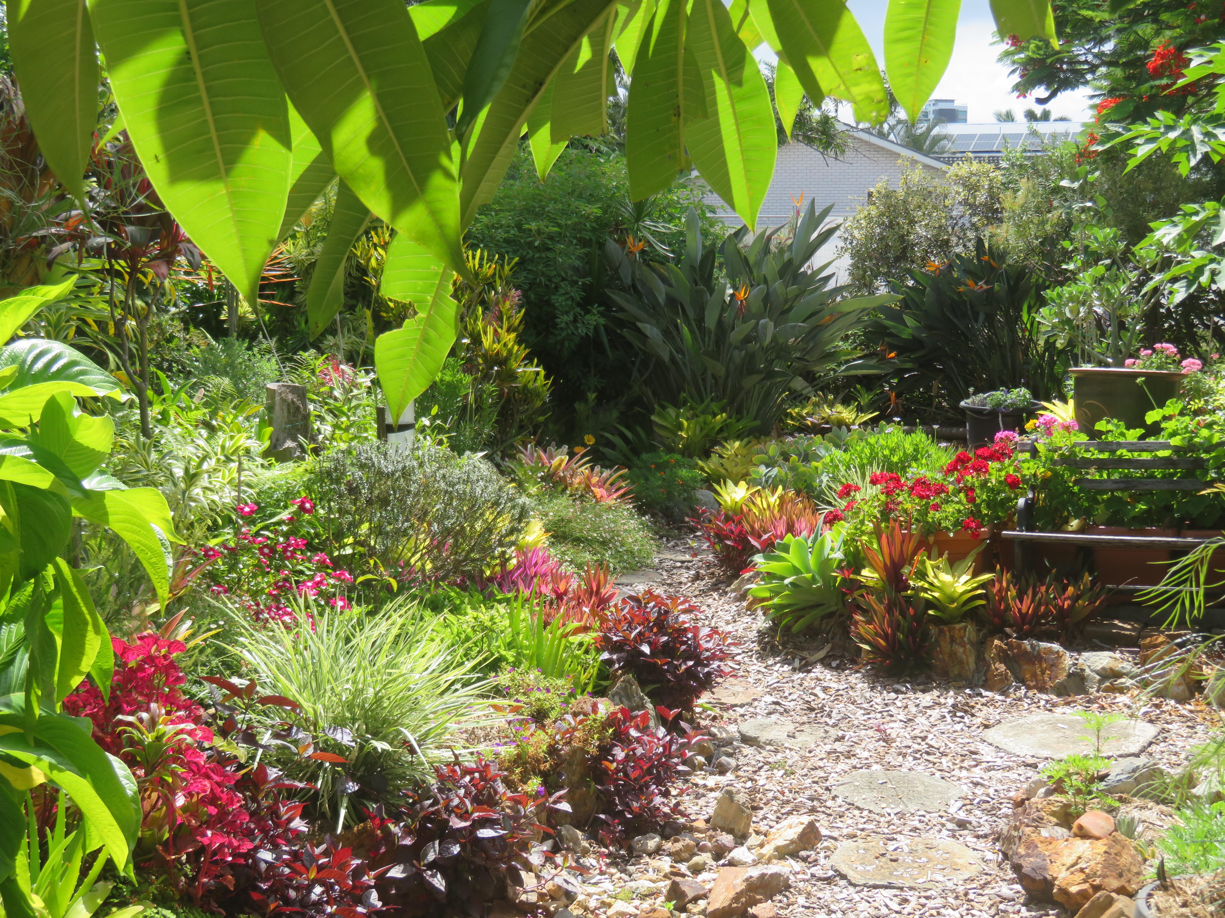 january garden 022_5184x3888