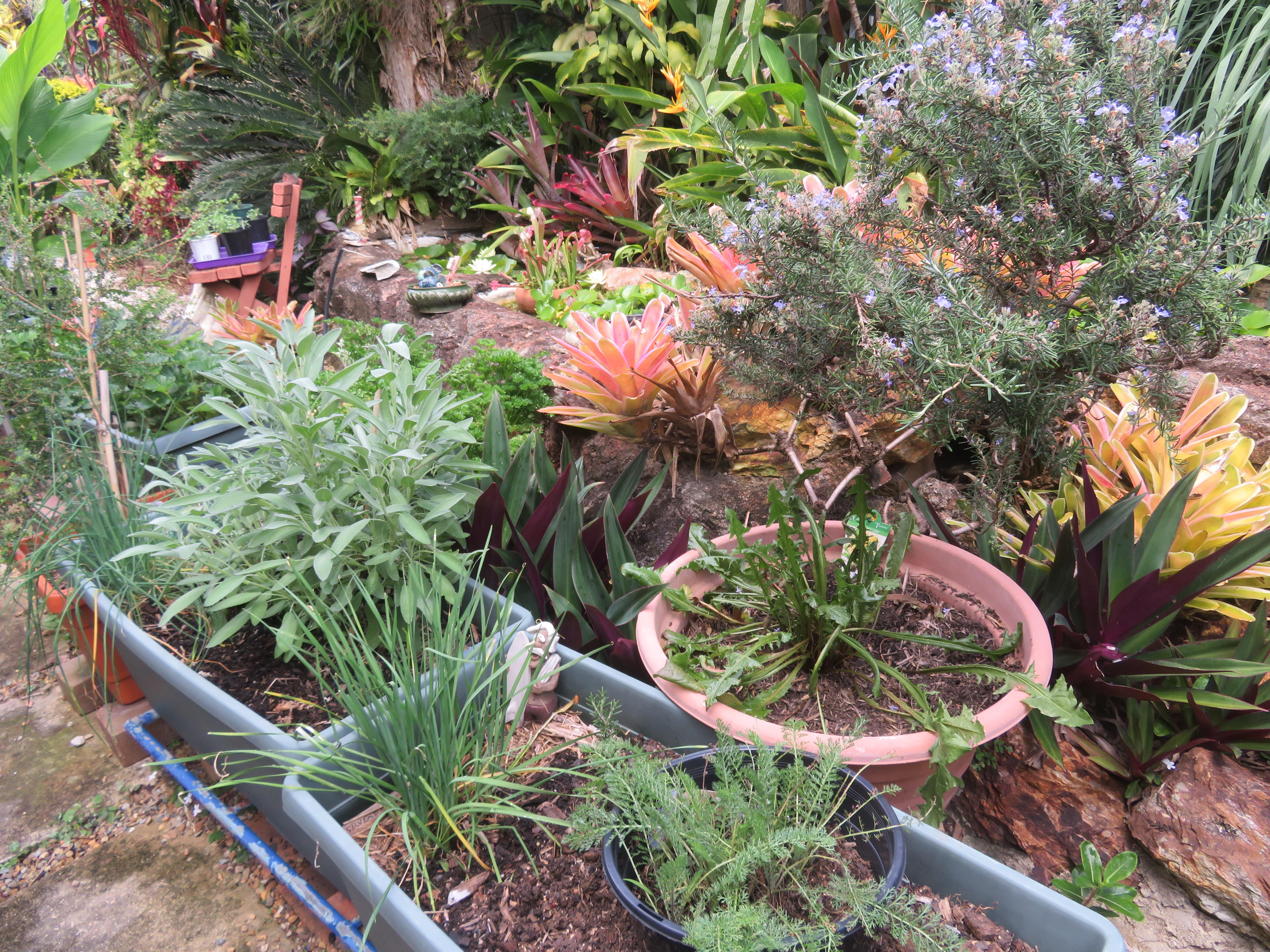 january garden 029_5184x3888
