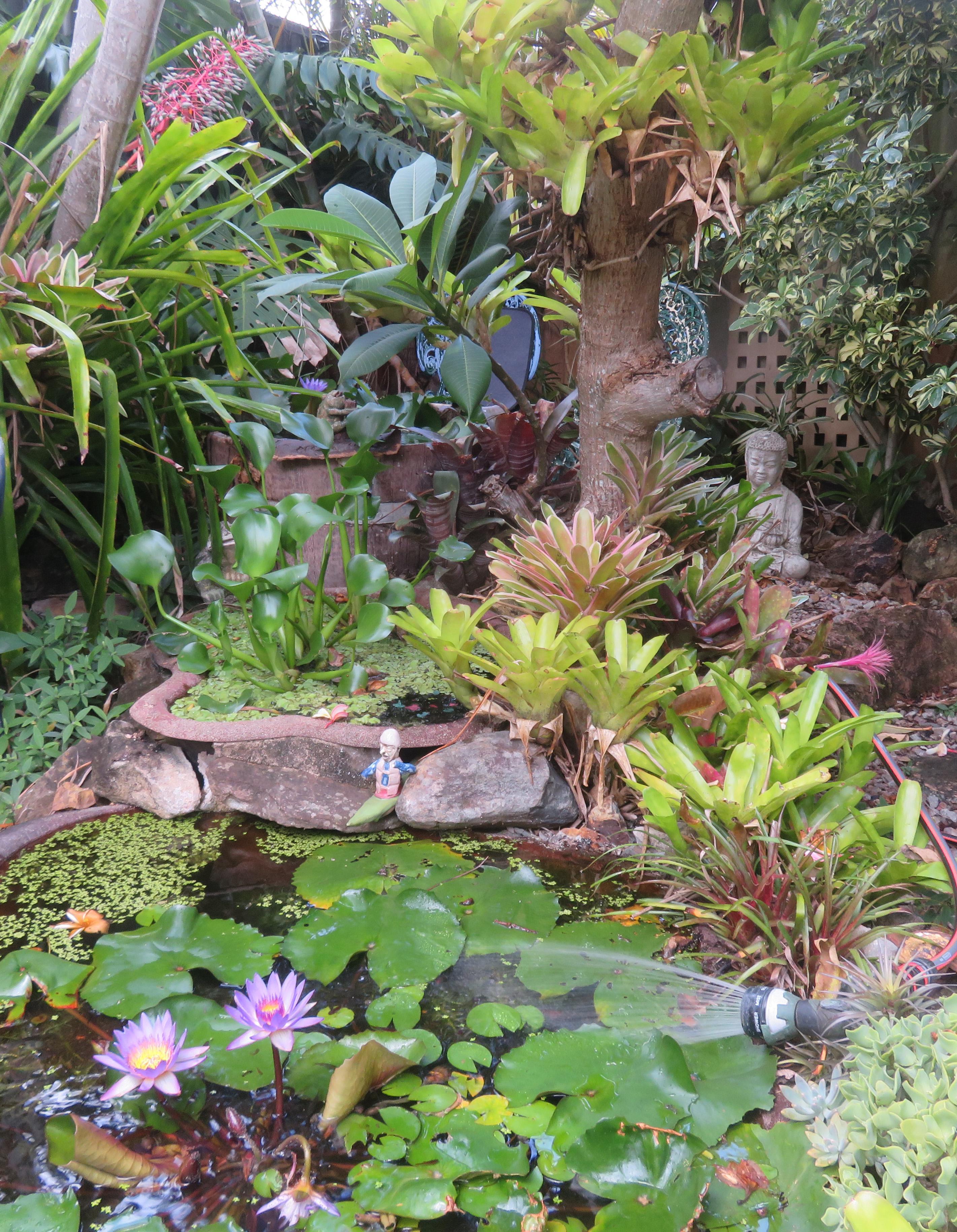 january garden 031_2842x3658