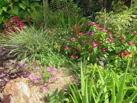 February garden 029_5184x3888