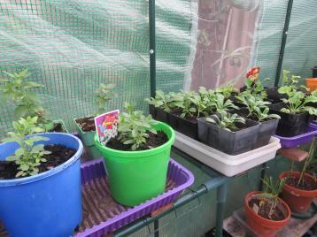 april garden 002_5184x3888