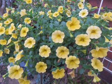 april garden 016_5184x3888