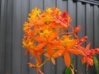 june garden 066_5184x3888