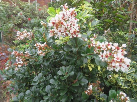 june garden 071_5184x3888
