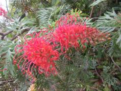 june garden 077_5184x3888